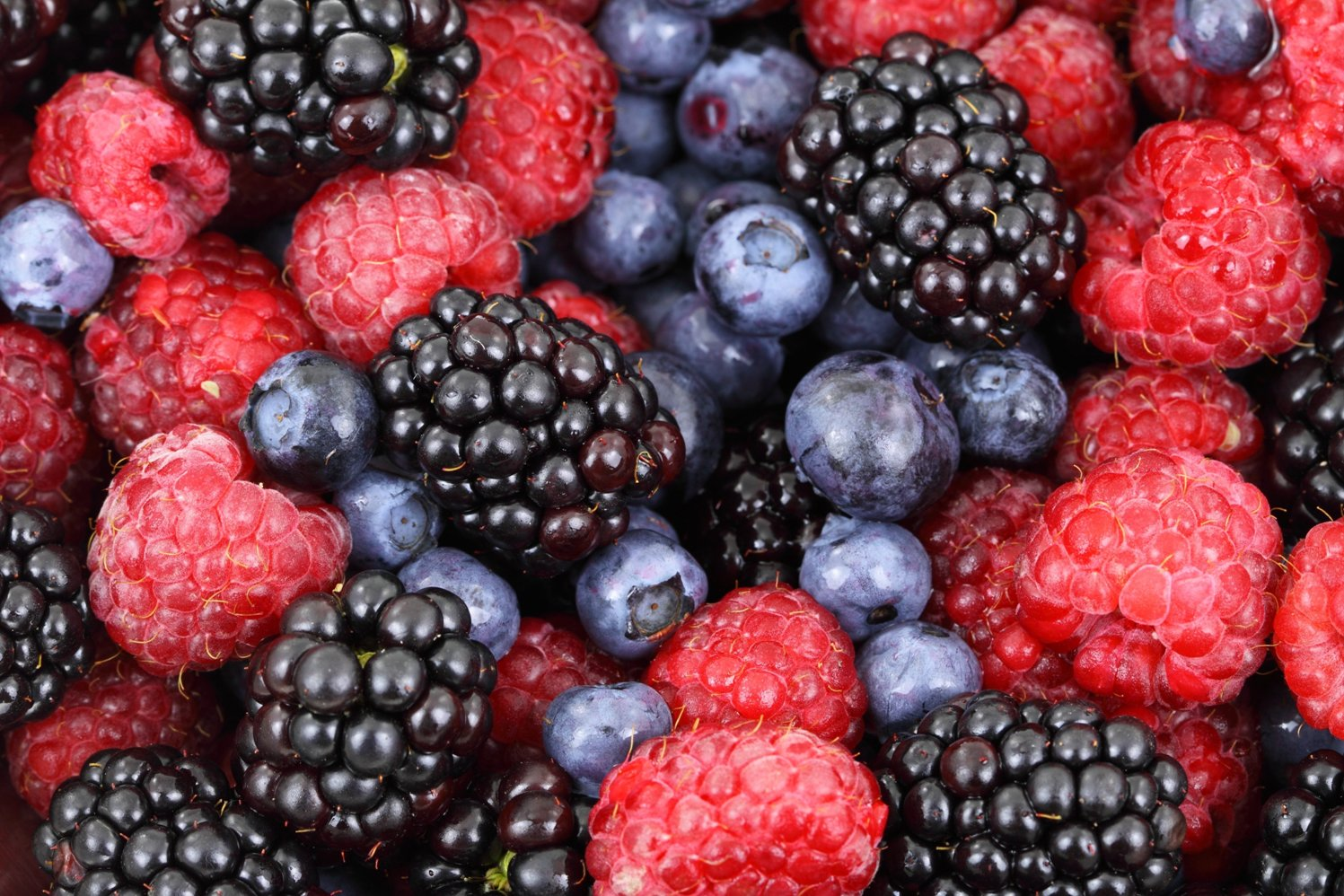 Book Review: Berries by Roger Yepsen